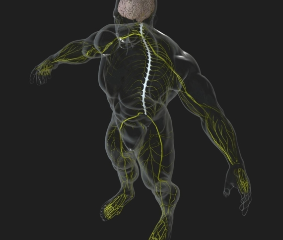 Ask the Experts: Neural Health and the Influence of Posture